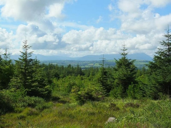 Country Residence For Sale in Co Kerry Forestry Portfolio, Co Kerry