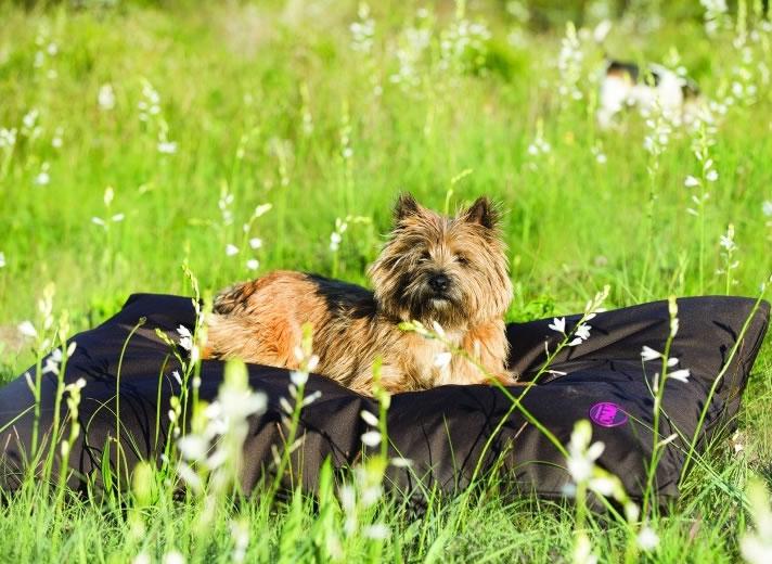 Amigo dog beds