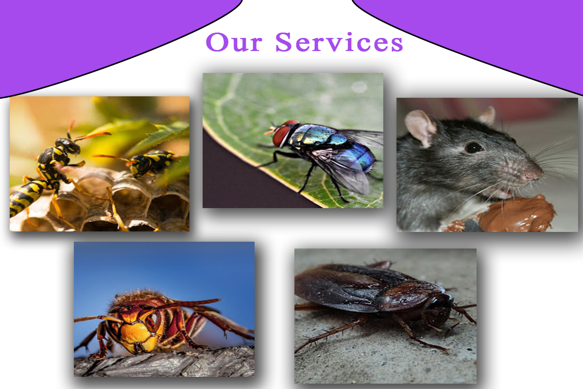 PestPure Solutions   Rodent control  Bed bug control   Dublin image 2