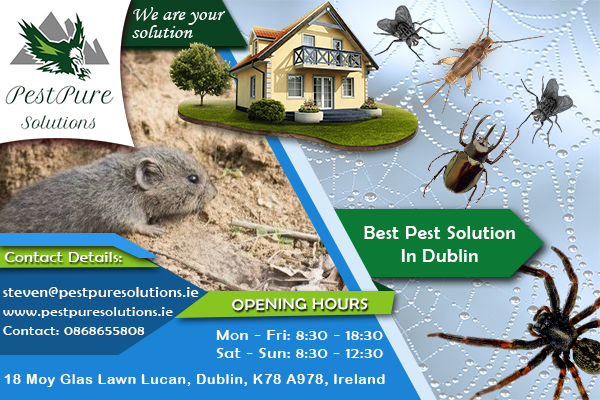 PestPure Solutions | Rodent control| Bed bug control | Dublin