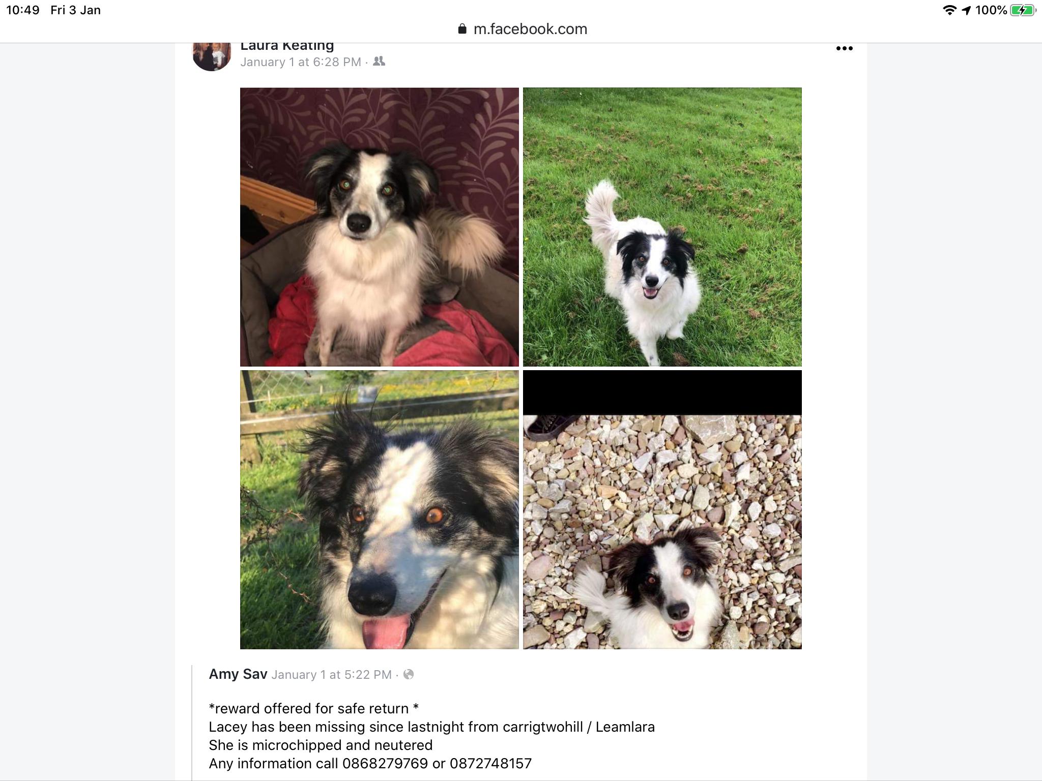 Lost dog image 1